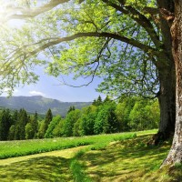 forest-trees-grass-green-summer-sun-glare-nature