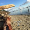 mission beach, tulalip washington, log